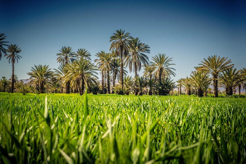 danger huile de palme