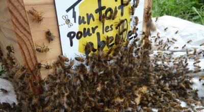 toit pour les abeilles
